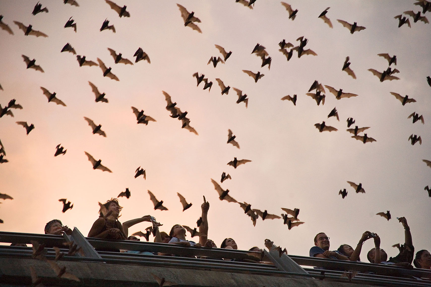 1004Mexican freetail Bats, Ann Richards Bridge, Austin Bats, for National Geographic Traveler