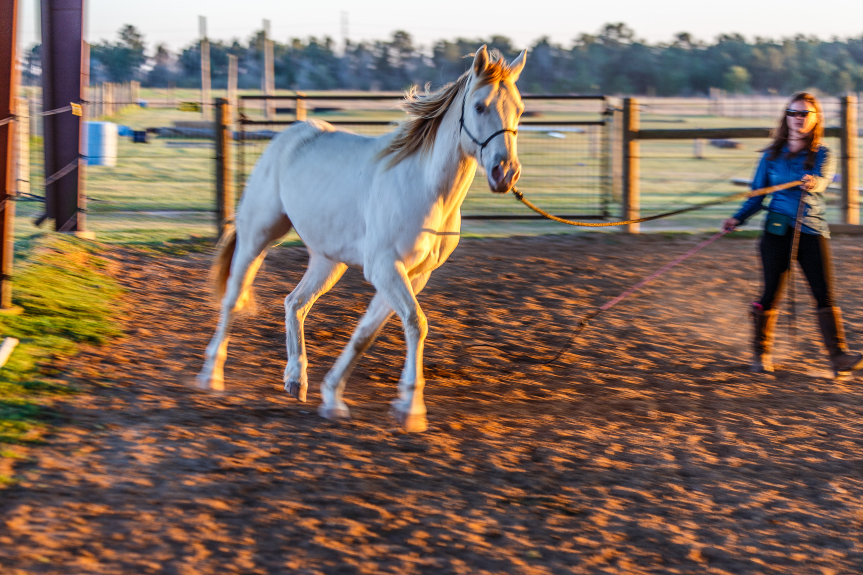 1032champagne colored horse, Five Horses Stables, Waller, Texas