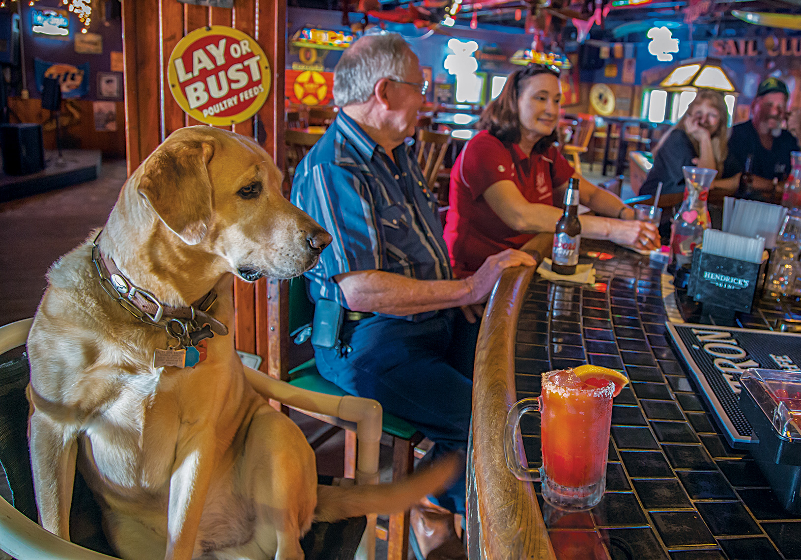 1040Salty the dog, golden labrador, The Salty Dog Bar, Port Aransas, Texas